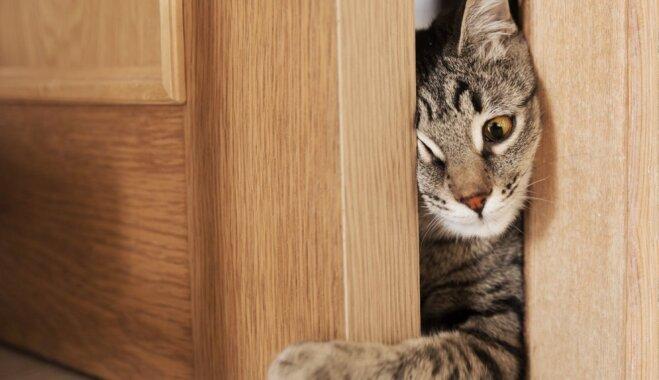 Viņu dzīvību izglāba kaķis: neticami stāsti par varonīgiem peļu junkuriem