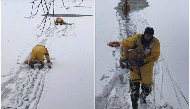 Veiksmes stāsts no ASV: aizsalušā upē atrod ielūzušu suni, kas pirms dienas pazudis