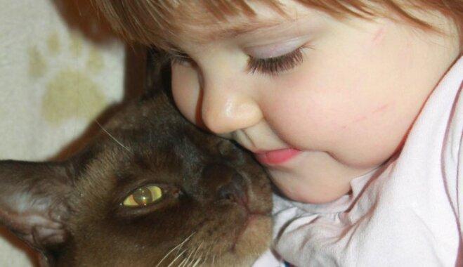 Burmas kaķis – rotaļīgs kompanjons līdz mūža galam