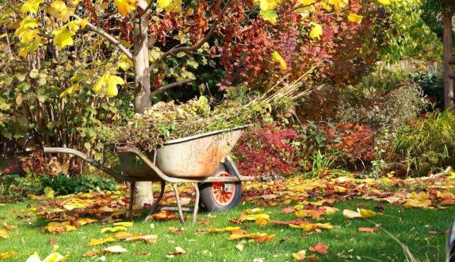 5 овощных культур, которые сажают под зиму