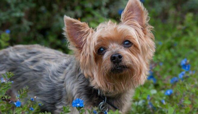 Desmit dzīves mācības, ko aizgūt no suņa
