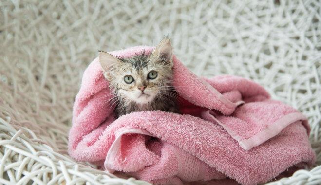 Когда кошке пора в ванну?