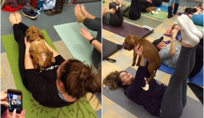Pilates ar kucēniem – pasauli saviļņo neparasta treniņu programma