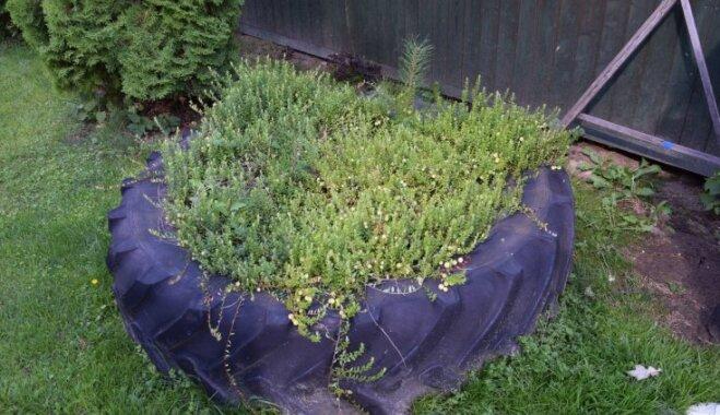 Oriģināla pieeja dārza izveidei – Beverīnas novada sakoptākās lauku sētas