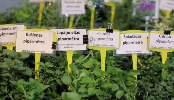 Fotoieskats dārza entuziastiem veltītā izstādē 'Dārzs un dzīvesstils'