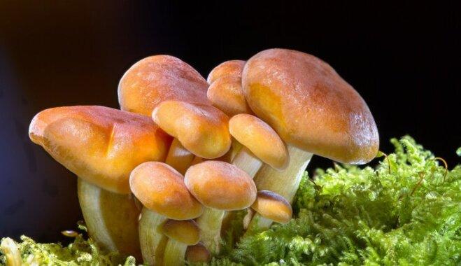 Один в лесу. 9 вещей, которые нельзя есть даже если вы умираете с голоду