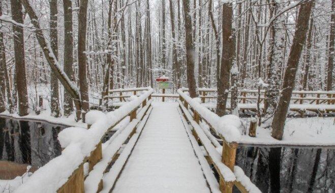Foto: Ziemas pasaka Ķemeru parka takās