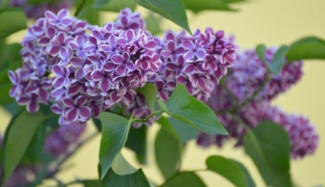 Кустарники-многолетники для сада и огорода, цветущие весной, летом и осенью