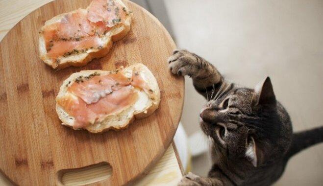 Кошачьи лакомства – польза или вред?