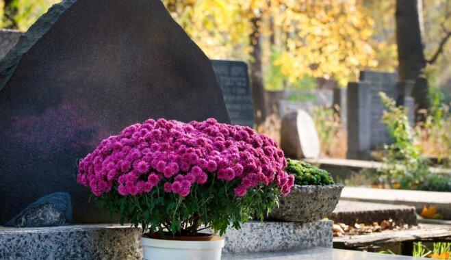 Что лучше посадить на кладбище ип ханин гранитная мастерская