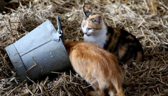 Чеснок от глистов и другие мифы о кошках