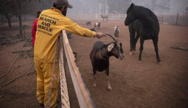 Foto: Kalifornijas ugunsgrēkos cietuši vairāki simti dzīvnieku