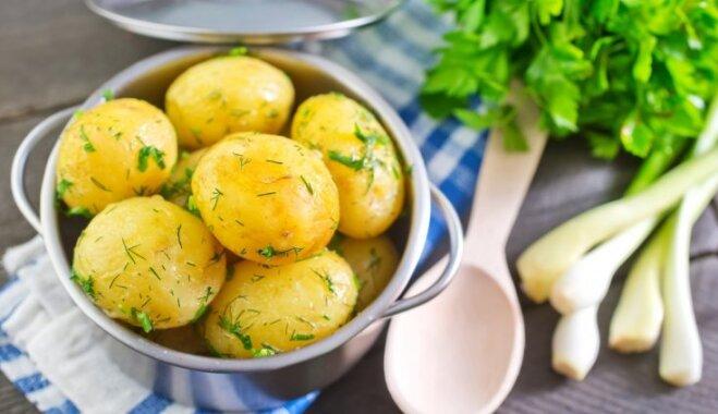 Большой гид по картофелю – готовим его на все сто в любом виде