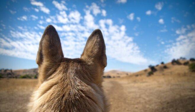 Наступает Год Собаки: 10 пород собак, выведенных в Германии