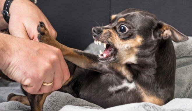 Mīts vai patiesība: suns var būt greizsirdīgs