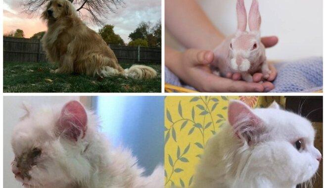 Mājdzīvnieki, ko citi negribēja: iedvesmojoši stāsti par neparastiem un īpašiem mīluļiem