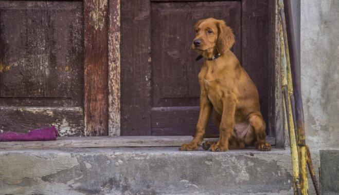 Pētījums: ar pozitīvu attieksmi nepietiek, lai atrisinātu pamesto dzīvnieku problēmu