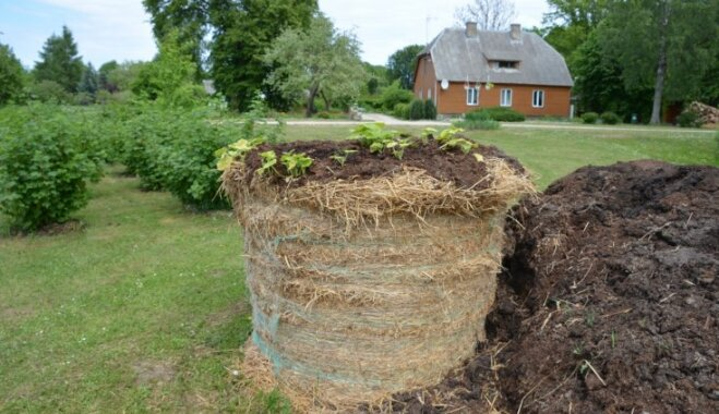 Radošas idejas, kā audzēt dārzeņus siena ruļļos vai salmu ķīpās