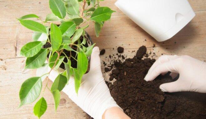 Азбука садовода: Грунт для комнатных растений