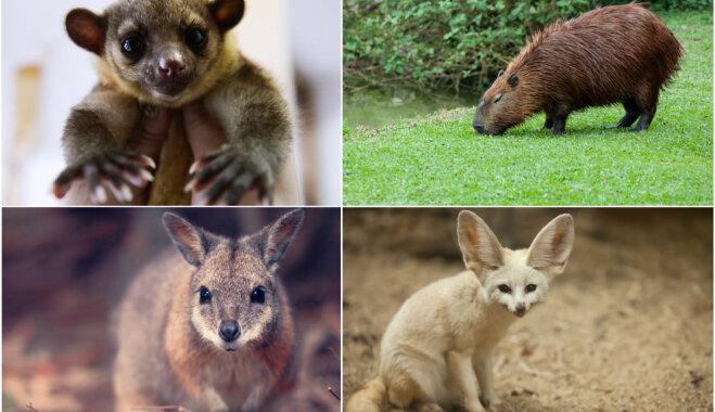 Četri eksotiski dzīvnieki, kurus mēdz turēt kā mājdzīvniekus