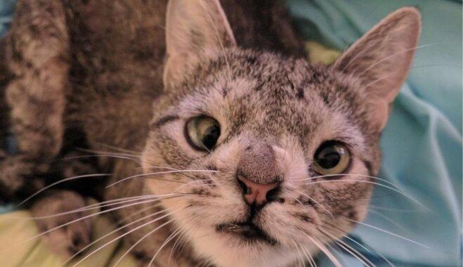 Šķielējošā Maja – neparasta kaķenīte, kas savaldzinājusi tūkstošiem cilvēku