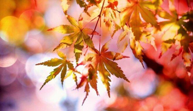 Почему листья осенью желтые и красные? (с точки зрения науки)