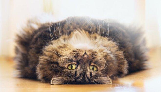Три вопроса, которые не дают покоя хозяевам кошек