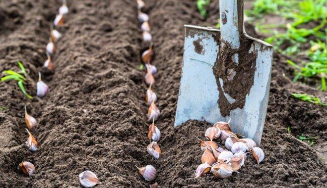 Izplatītas kļūdas, kas dārzos tiek pieļautas rudenī