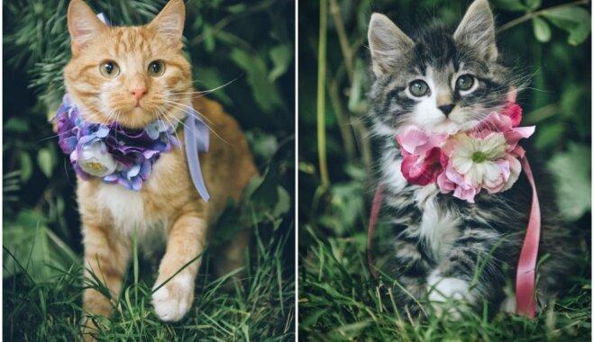 Apburošās fotogrāfijās attēloti krāšņi sapucēti patversmes 'Labās mājas' kaķīši