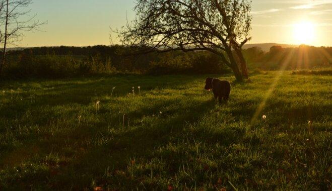Stāsts iz dzīves: kā suns pārdzīvoja otra mīluļa aiziešanu mūžībā