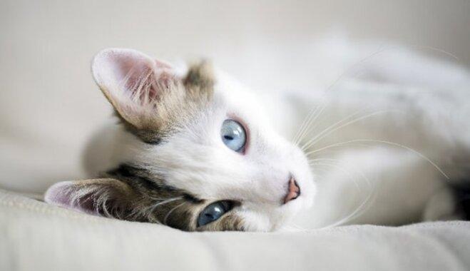 Тревожные признаки – кошка заболела?