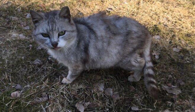 Sabiedriskā kaķenīte Monika meklē gādīgu saimnieku