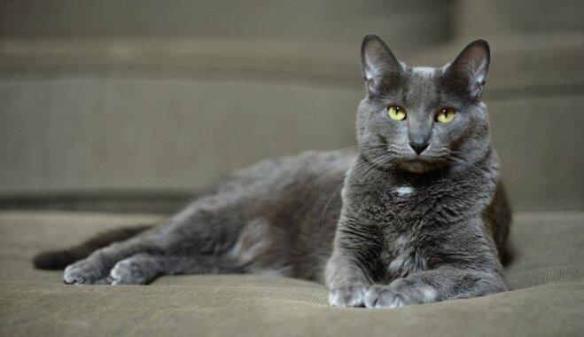 Desmit retas un neparastas kaķu šķirnes