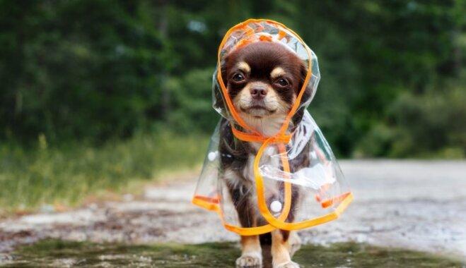 Saindēšanās un citi draudi suņu un kaķu veselībai rudenī
