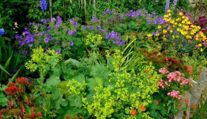 10 долгоцветущих и зимостойких цветов, которые может вырастить любой