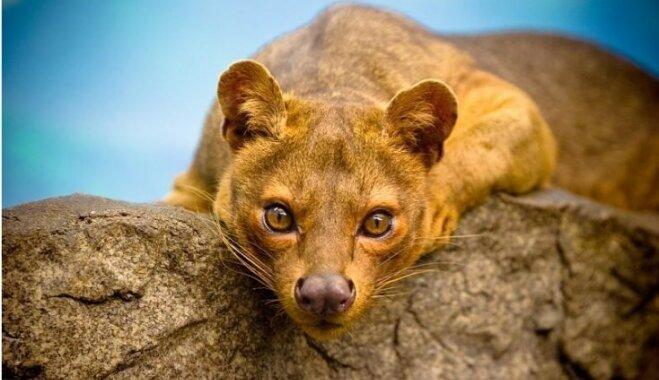 10 neparasti savvaļas dzīvnieki, kurus tu varētu nezināt
