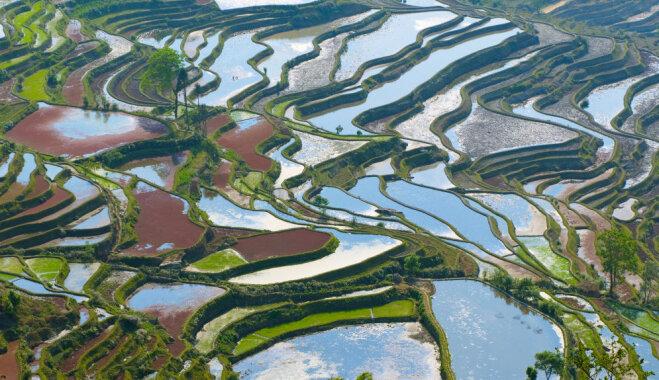 ФОТО: Место, где рисовые поля — шедевры ландшафтного дизайна