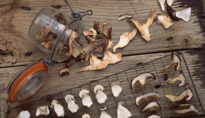 Как хранить белые грибы в домашних условиях 809