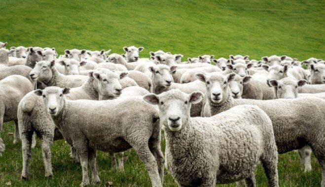 Ko par mājdzīvniekiem Jāņos vēsta senlatviešu ticējumi