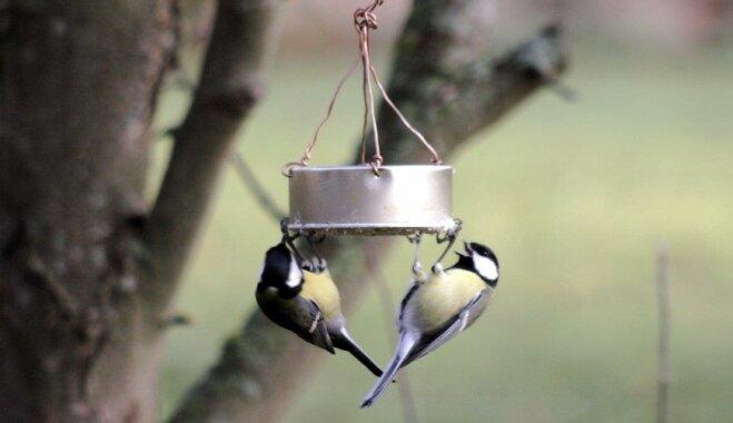 Palīdzi lidotājiem pārziemot; oriģināla ideja putnu barošanai gada aukstajā laikā