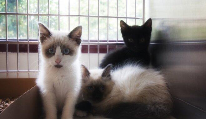 'Tie ir latviešu vai krievu kaķi?' Ikdiena britu aģentes Fifi dibinātajā patversmē 'Dzīvnieku draugs'