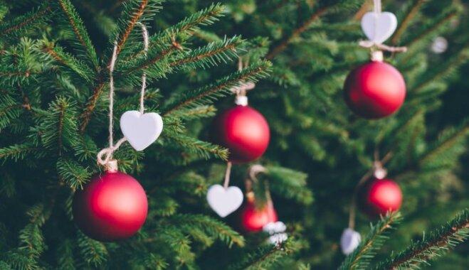 No sagādāšanas līdz kopšanai un stādīšanai dārzā – svarīgākais par Ziemassvētku eglītēm