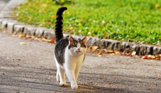 Ko par kaķi vēsta viņa aste