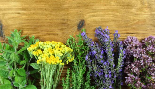 Четыре необычных способа сохранить на зиму душистые травы