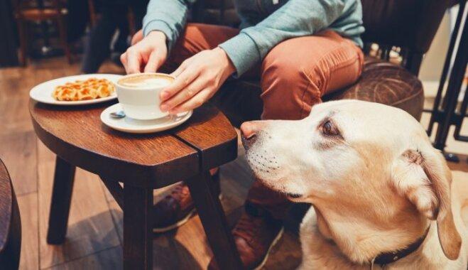 10 draudzīgas vietas Rīgā, kur doties kopā ar suni