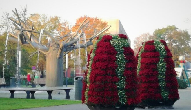Foto: Ventspilī puķu piramīdas ietērptas krāšņā rudens ziedu rotā