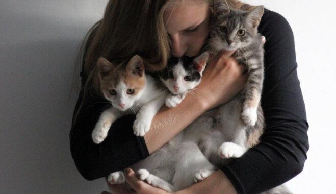 Madara, kas adoptēja trīs kaķus: sapratu, ka ar vienu mājās nebrauksim