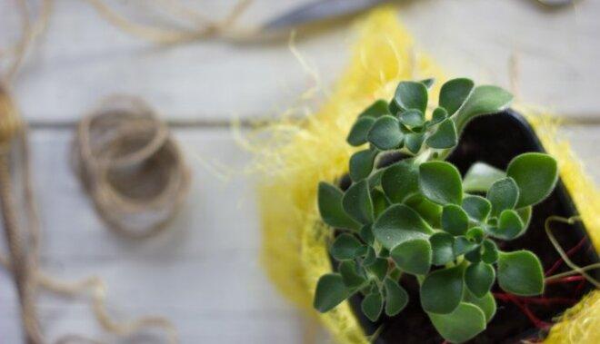 10 augi, kas mājās atnes veiksmi un mīlestību