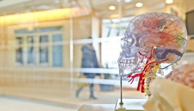 Neirofizioloģijas profesore: cilvēka lielākie netikumi rodas tieši smadzenēs