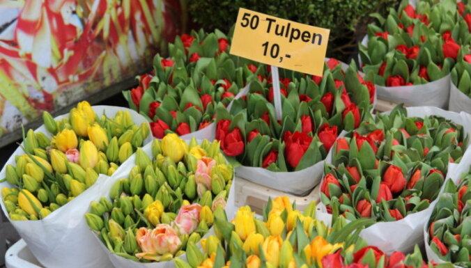 ФОТО DELFI. Прогулки по рынкам мира: что почем на цветочном рынке Амстердама